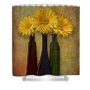 Gerbera Trio Shower Curtain