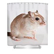 Gerbil Gerbillinae Shower Curtain