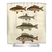 German Sea Fish Shower Curtain