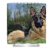 German Shepherd Dog Shower Curtain