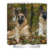 German Shepherd Dogs Shower Curtain