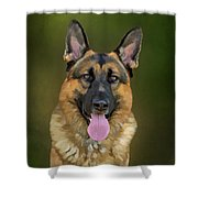 German Shepherd Portrait II Shower Curtain