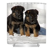 German Shepherd Pups Shower Curtain by Aimee L Maher Photography and Art Visit ALMGallerydotcom