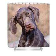 German Short-haired Pointer Puppy Shower Curtain
