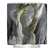 Getting Attention Shower Curtain