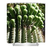 Getting Ready To Bloom Shower Curtain