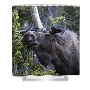 Getting The Look Shower Curtain