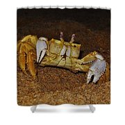 Ghost Crab 6 11/01 Shower Curtain