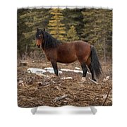 Ghost Forest Stallion Shower Curtain