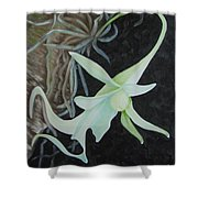 Ghost Orchid On A Palm Tree Shower Curtain