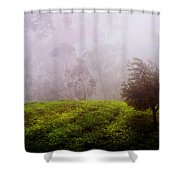 Ghost Tree In The Haunted Forest. Nuwara Eliya. Sri Lanka Shower Curtain
