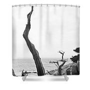 Ghost Tree Site Shower Curtain