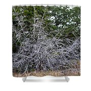 Ghost Trees 1 Shower Curtain