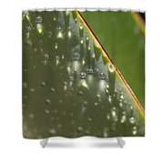 Giant Agave Abstract 4 Shower Curtain