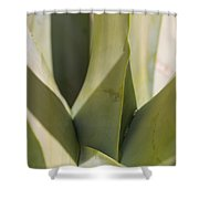 Giant Agave Abstract 7 Shower Curtain