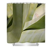 Giant Agave Abstract 8 Shower Curtain