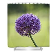 Giant Allium Flower Shower Curtain