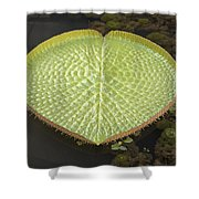 Giant Amazonian Water Lily Pads Closeup Shower Curtain