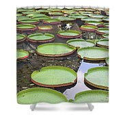 Giant Amazonian Water Lily Pads Shower Curtain