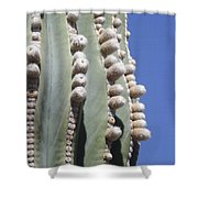 Giant Cardon Begins To Bloom Shower Curtain