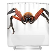 Giant Crab Spider Suriname Shower Curtain