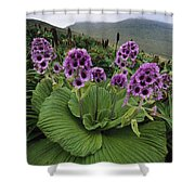Giant Daisy In Full Bloom Campbell Shower Curtain