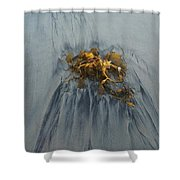 Giant Kelp On The Beach Shower Curtain