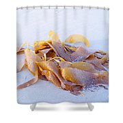 Giant Kelp Washed Ashore Shower Curtain
