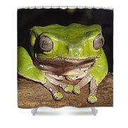 Giant Monkey Frog  Venezuela Shower Curtain