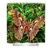Giant Moth Shower Curtain