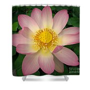 Giant Pink Lotus Shower Curtain