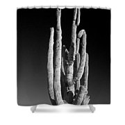 Giant Saguaro Cactus Portrait In Black And White Shower Curtain