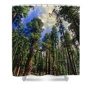giant sequoias sequoiadendron gigantium yosemite NP Shower Curtain