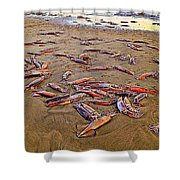 Giant Squid Capitola Beach Shower Curtain