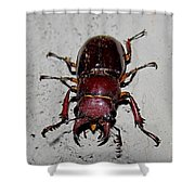 Giant Stag Beetle Shower Curtain