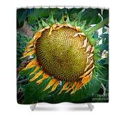Giant Sunflower Drama Shower Curtain