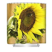 Giant Sunflower With Buds Shower Curtain