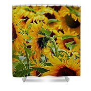Giant Sunflowers Shower Curtain