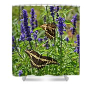 Giant Swallowtail Butterfly Couple Shower Curtain