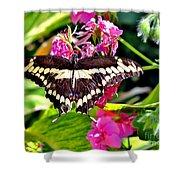Giant Swallowtail Shower Curtain