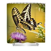Giant Swallowtail On Thistle Shower Curtain