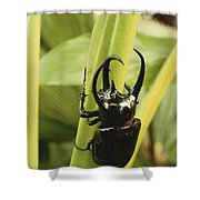 Giant Three-horned Beetle Shower Curtain