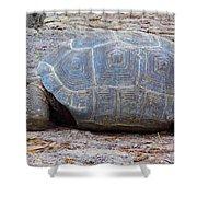 The Giant Aldabra Tortoise Shower Curtain
