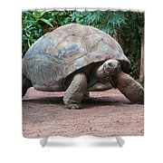 Giant Turtle Shower Curtain
