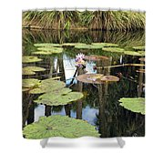 Giant Water Lilies Shower Curtain