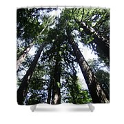 Giants Of The Forest Shower Curtain