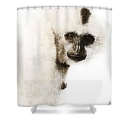 Crested Gibbon #1 Shower Curtain