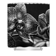 Gift Of Flowers Shower Curtain