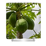 Gigantic Papaya Shower Curtain