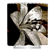 Gilded Lilies 3 Shower Curtain